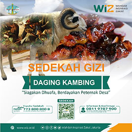 wizweb.jpg