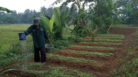BAZNAS Kembangkan Pertanian Terpadu untuk Ketahanan Pangan saat Krisis Covid-19