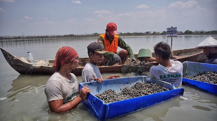BAZNAS Dorong Ketahanan Pangan Nelayan Lewat Budidaya Kerang