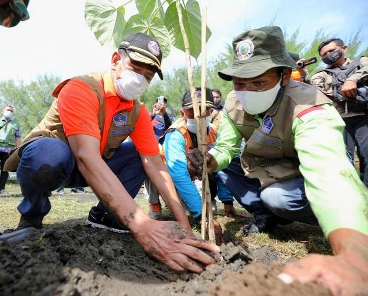 Tanam Butun di Desa Bunton, Cara Doni Tangkal Tsunami
